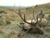 New Zealand Elk