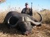 Africa Cape Buffalo